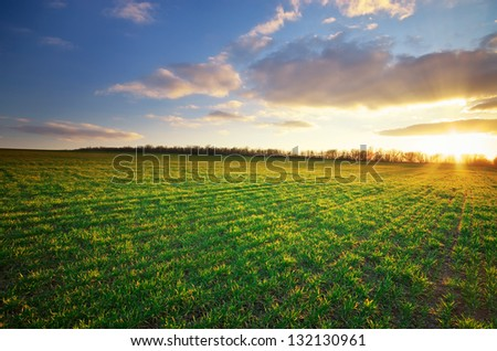 Spring landscape. Green meadow. Nature composition. - stock photo