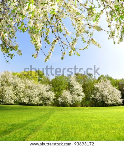 Spring landscape in the Czech Republic - stock photo