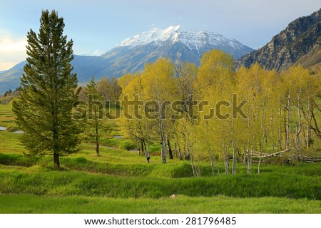 Spring landscape in the Utah mountains, USA. - stock photo