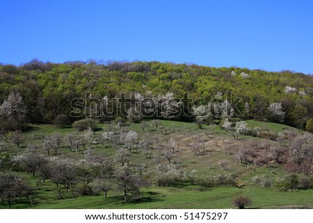 Spring landscape, meadow with trees in bloom - stock photo