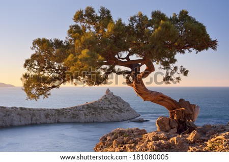 Spring landscape with a beautiful pine tree on a cliff. View from the mountains to the sea and cape. Crimea, Ukraine, Europe - stock photo