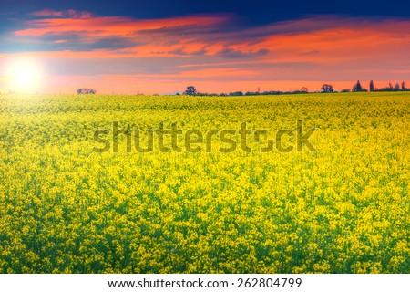 Spring landscape with a field of canola at sunrise,Transylvania,Romania - stock photo