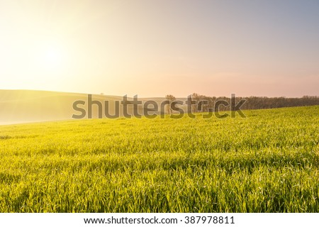 Spring landscape with agricultural fields, farming background - stock photo