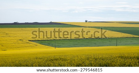 Spring Landscape with agricultural land tillage, wheat, canola, corn and sunflower against the blue sky - stock photo