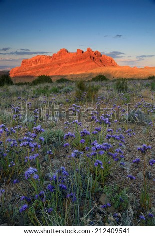 Spring landscape with blue wildflowers, San Rafael Swell, Utah, USA. - stock photo