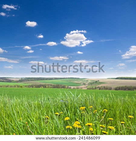 Spring landscape with dandelion field and blue sky - stock photo