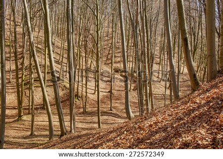 Spring landscape with deciduous forest and fallen leaves in a sunny day - stock photo