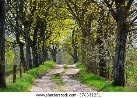 Spring landscape with dirt road in forest