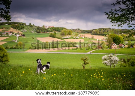 Spring landscape with fields, meadows and forest. - stock photo