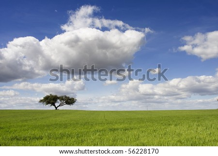 Spring landscape with green field and a blue sky - stock photo