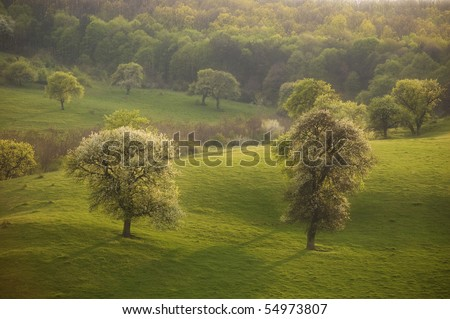 spring landscape with green grass and trees at sunset - stock photo