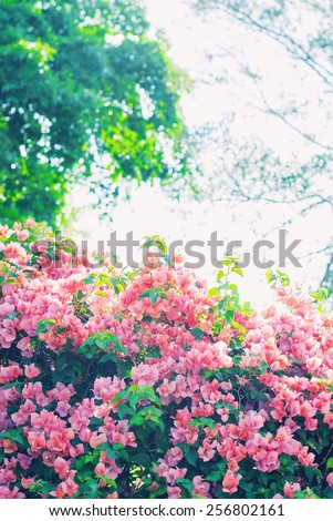 Spring landscape with krone of trees and the blossoming bush - stock photo