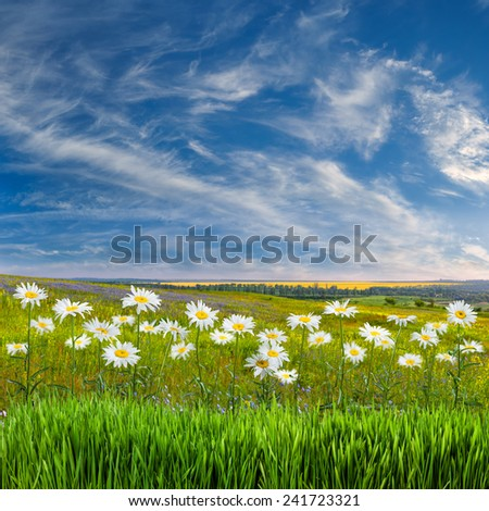 Spring landscape with lovely flowers - stock photo