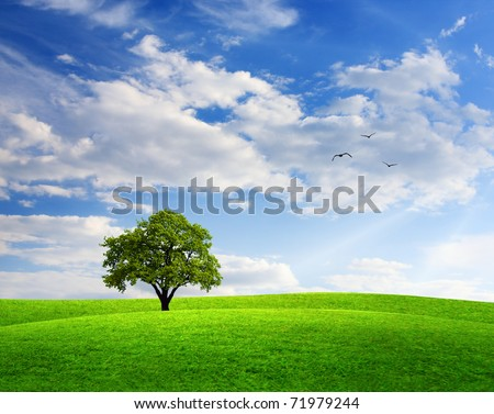 Spring landscape with oak tree and blue sky - stock photo