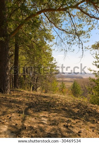 spring landscape with pinetrees and blue sky