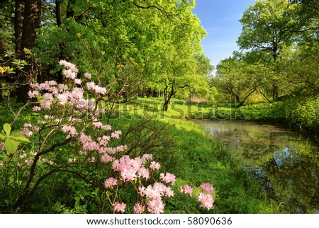 Spring landscape with pond and Rhododendron - stock photo