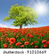 Spring landscape with red poppy - stock photo