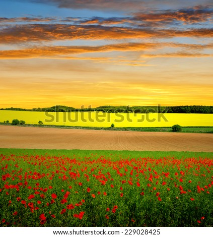 Spring landscape with red poppy field at sunset - stock photo