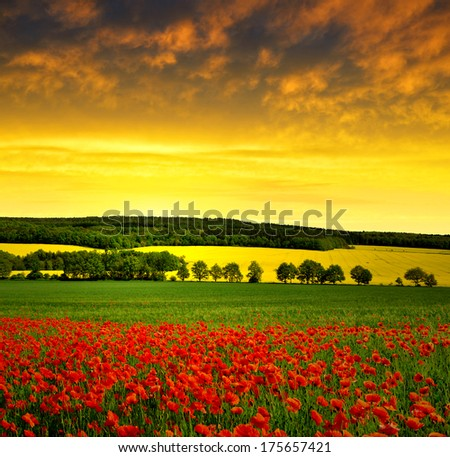 Spring landscape with red poppy field in the sunset  - stock photo