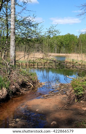 Spring landscape with stream flowing across forest