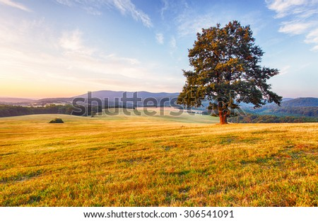 Spring landscape with tree and sun - stock photo