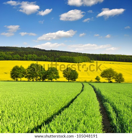 spring landscape with wheat field - stock photo