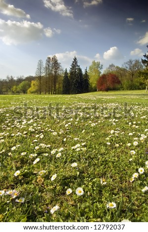 Spring landscape with white flower meadow and stormy clouds - stock photo