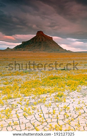 Spring landscape with wildflowers in the Utah desert, USA. - stock photo