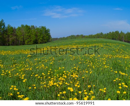 spring landscape with yellow dandelions flower - stock photo