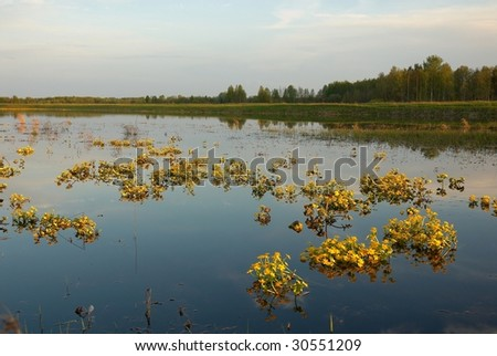 Spring landscape with yellow flowers on water