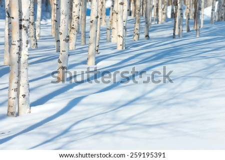 Spring landscape with young birches - stock photo