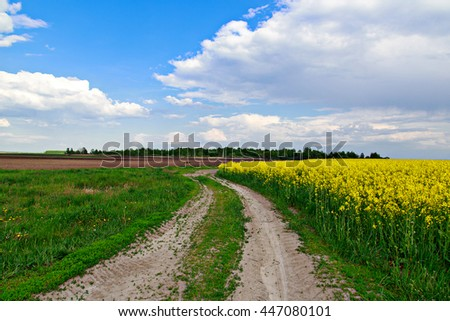 Spring landscape. Yellow field. Alfalfa