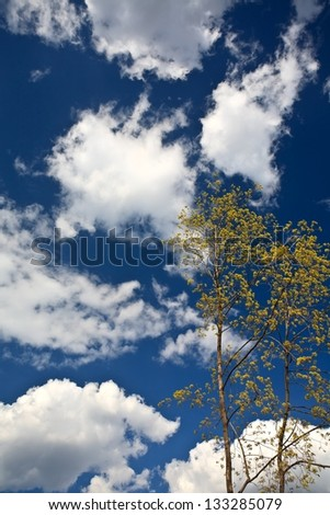 spring leaf clouds sky - stock photo