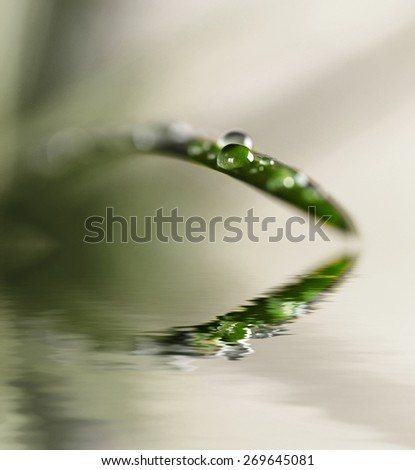 Spring leaf with water drops after rainstorm - stock photo