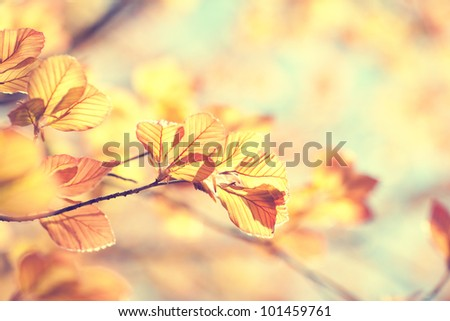 Spring leaves. - stock photo