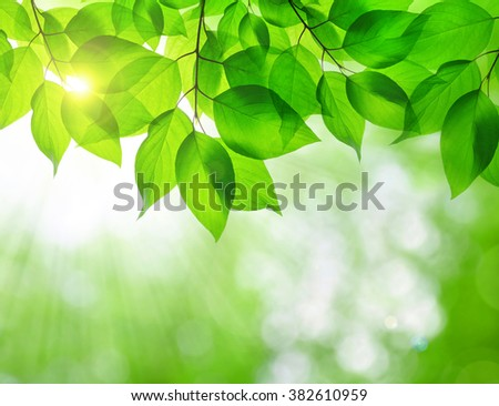 Spring leaves on natural green background. - stock photo