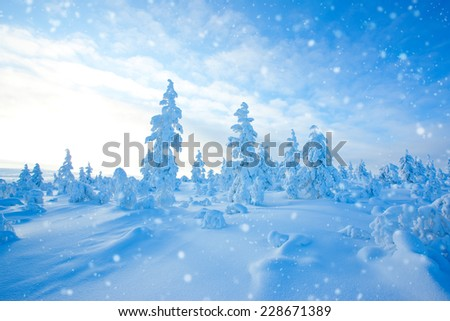 Spring-like day in north - stock photo