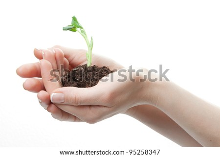 spring little plant in the hand on white background. with clipping path - stock photo