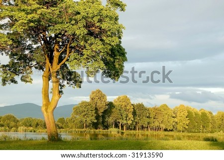 Spring maple tree on the shore of the lake at sunrise. - stock photo