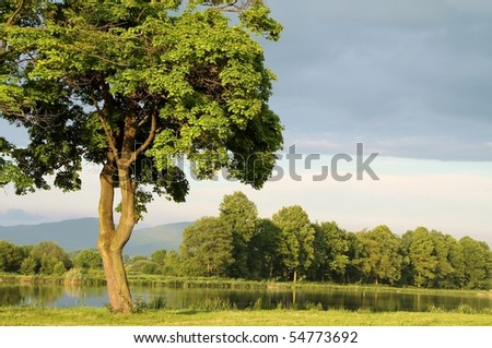 Spring maple tree on the shore of the lake in the morning sunshine. - stock photo