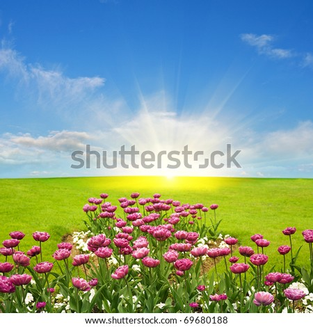 Spring meadow and sun - stock photo
