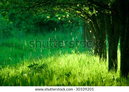 Spring meadow and trees - stock photo