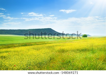 Spring meadow. Composition of nature.