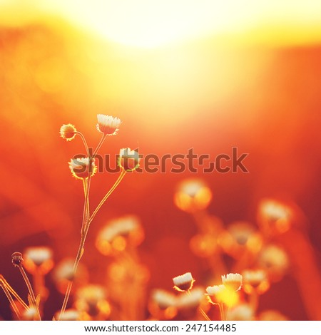 spring meadow flowers - stock photo