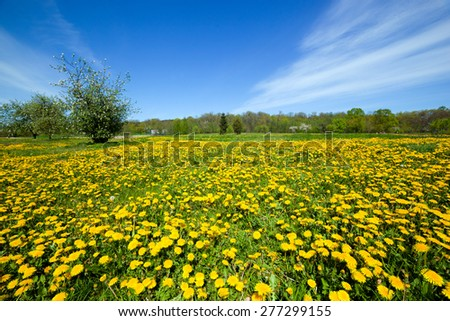 Spring meadow full of dandelions flowers and green grass. Blue sky - stock photo