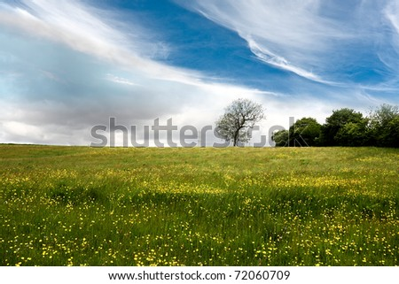 Spring meadow full of yellow flowers - stock photo