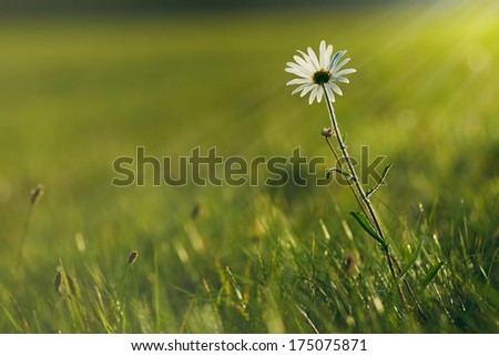 Spring meadow in sunset light. Low DOF - stock photo