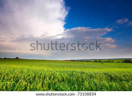 Spring Meadow with blue sky and clouds - stock photo
