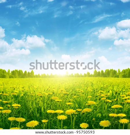 Spring meadow with dandelions and sunshine in blue sky. - stock photo