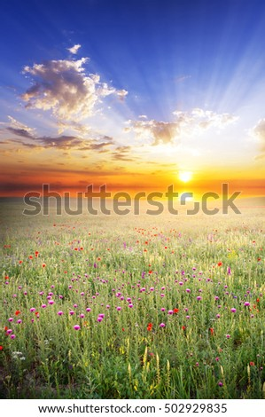 spring meadow with flowers and lush grass at sunset.Wild blooming flowers on a spring meadow in the background sitting down over the sea of the sun.